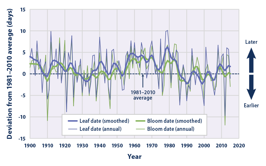 Line graph from 1900 to 2015 showing changes in the timing of when lilacs and honeysuckles grow their first leaves and flower blooms in the spring across the contiguous 48 states.