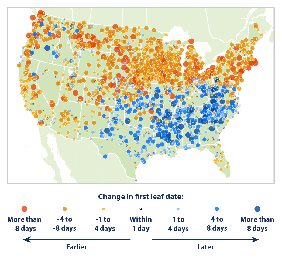 Map showing the change in first leaf dates at weather stations across the contiguous 48 states. This map compares the average first leaf date during two 10-year periods: 1951-1960 and 2006-2015.