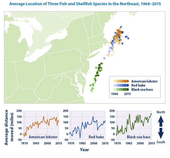 Map showing American lobster, Red hake, black sea bass migration up the East coast based on climate change influencesSince the late 1960s, the three species have moved northward by an average of 119 miles.