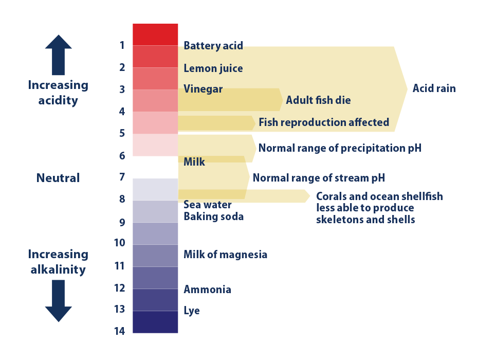 Diagram illustrating the pH scale with reference to several common substances.