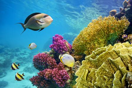A coral reef with tropical fish.