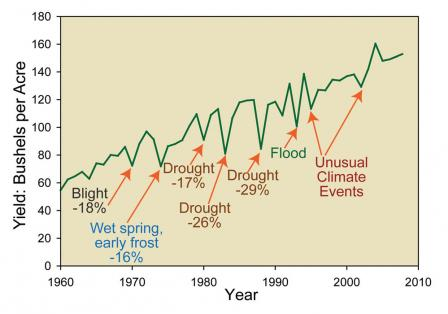 Line graph that shows the yield in bushels per acre by year. The map calls out several events that caused significant declines in yield. Blight, wet spring and early frost, droughts, flood, and unusual climate events caused as much as 29 percent declines in yield. The data ranges from 1960 to 2010 and over that period of time the trend shows that the yield per acre has risen from approximately 60 to 150 bushels per acre.