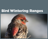 Bird Wintering Ranges