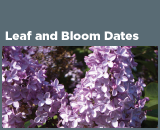Leaf and Bloom Dates