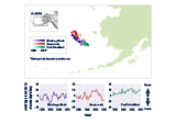 Map and line graphs showing the average location of three fish and shellfish species in the eastern Bering Sea from 1982 to 2015.